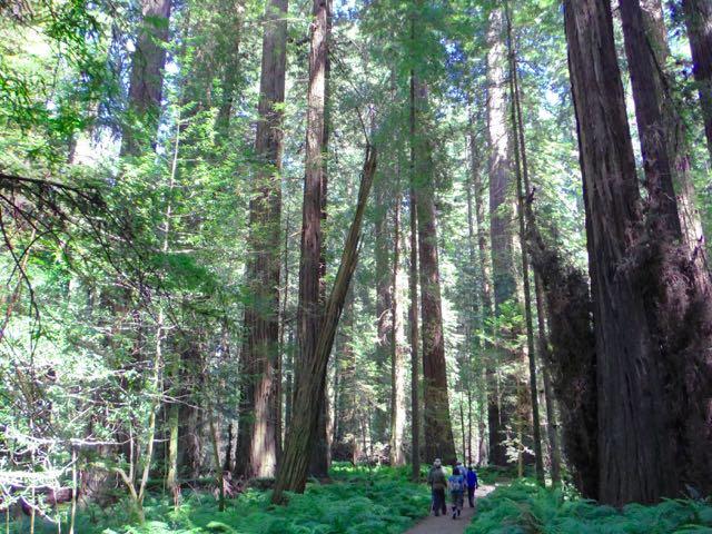 2018 06 14 Redwoods 56