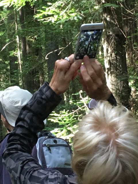 2018 06 14 Redwoods 6