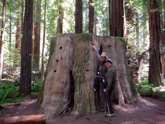 2018 06 14 Redwoods 61
