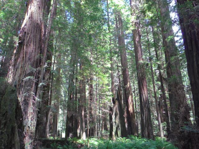 2018 06 14 Redwoods 63
