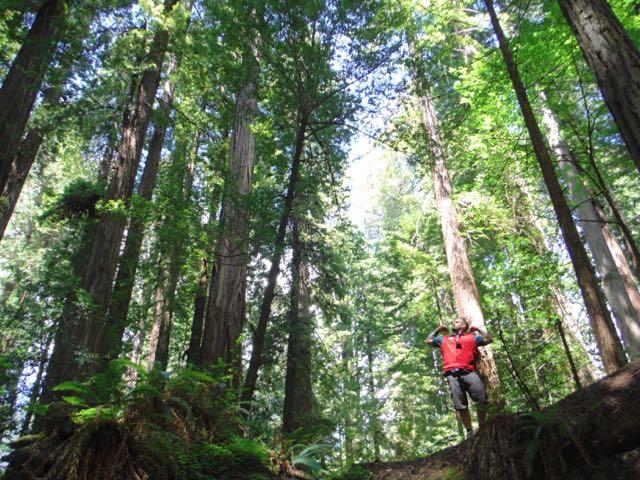 2018 06 14 Redwoods 69