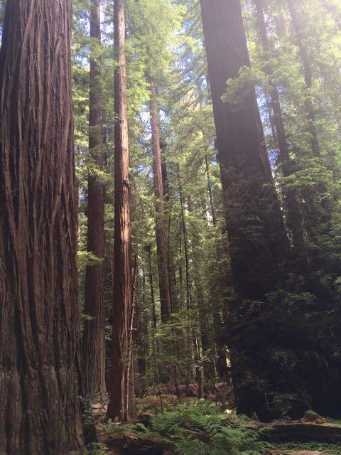 2018 06 14 Redwoods 9