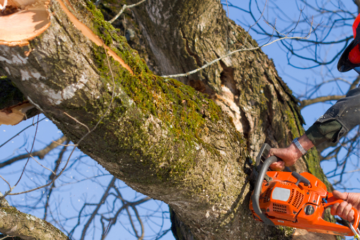 TREE REMOVAL DALLAS