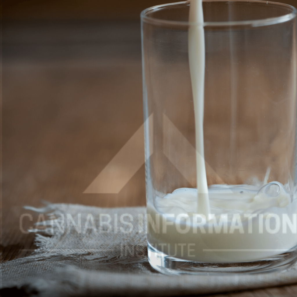 Cannabis milk, cannamilk, how to make cannabis-infused milk, marijuana milk, weed milk, weed infused milk, infused milk recipe, easy infused milk recipe, how to make marijuana infused milk easy, easy cannabis edibles, flower to oil ratio, endocannabinoid system and edibles, cannabis decarboxylation,