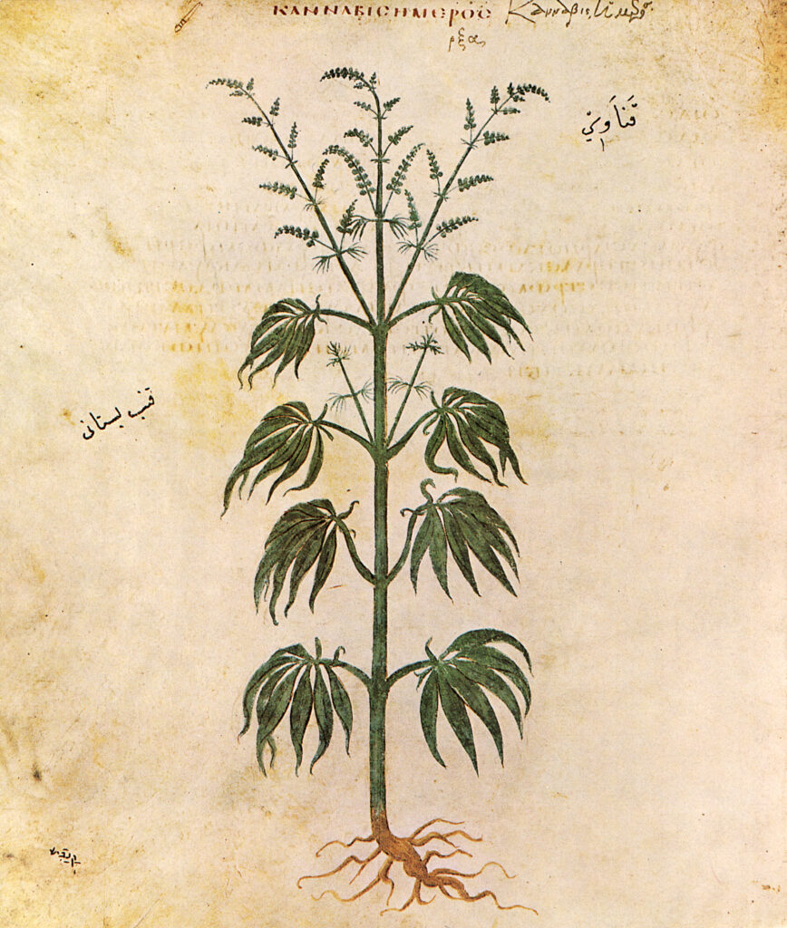 history of cannabis, history of marijuanas, who was the first person to smoke a blunt, first person to ever get high, hemp history timeline, long term side effects of marijuanas, where did hemp originate, who smoked the first blunt, emperor shen neng, the history of marijuana medicine, cannabis indica vs sativa, cannabis classification, cannabis marijuana history, facts about the history of cannabis