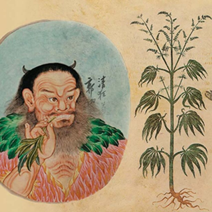 worlds oldest cannabis stash, cannabis history china, cannabis history and religion, worlds oldest weed, the oldest discovered weed stash, cannabis in china, cananbis shaman china, old chinese cannabis, cannabis found in tomb, who was the first person to smoke cannabis, cannabis in a tomb, buried cannabis, 2700 year old cannabis, oldest cannabis in the world,