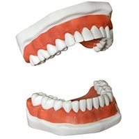 Dentures and Partial Dentures