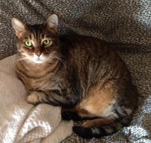 KayCee, Luanne's Tabby cat
