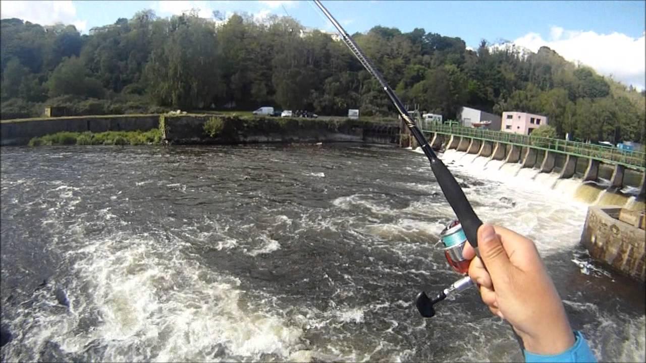 Pêche Alose à Quai