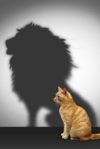 succession-planning-cat-lion-shadow_234x350