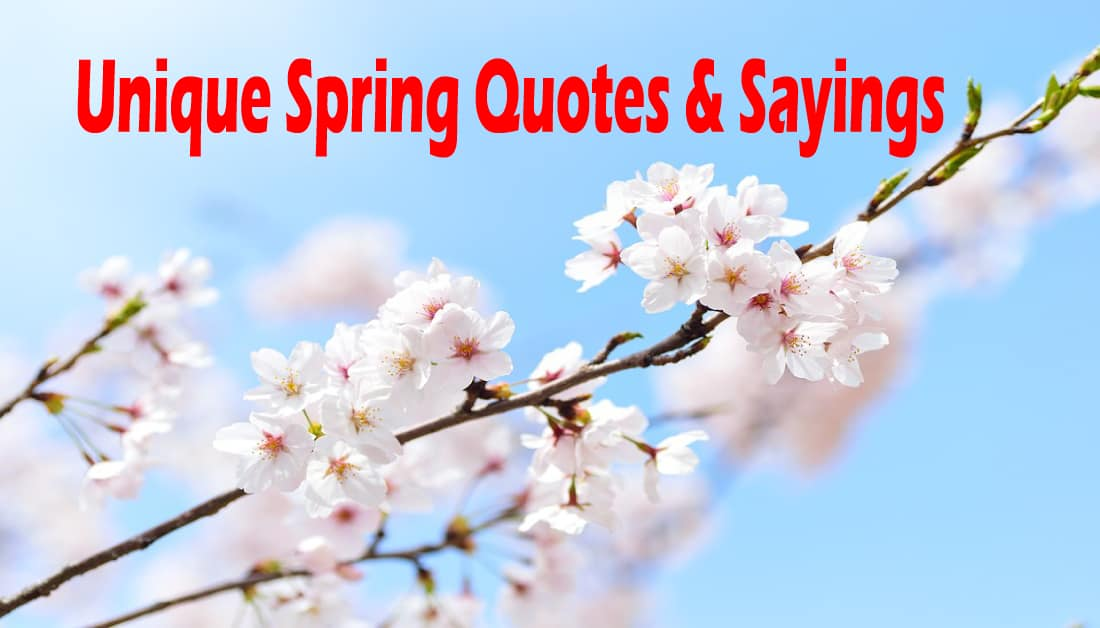25 Unique Spring Quotes And Sayings Brighten Your Spring 2020