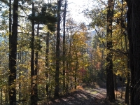lot-14b-fall-view-northeast