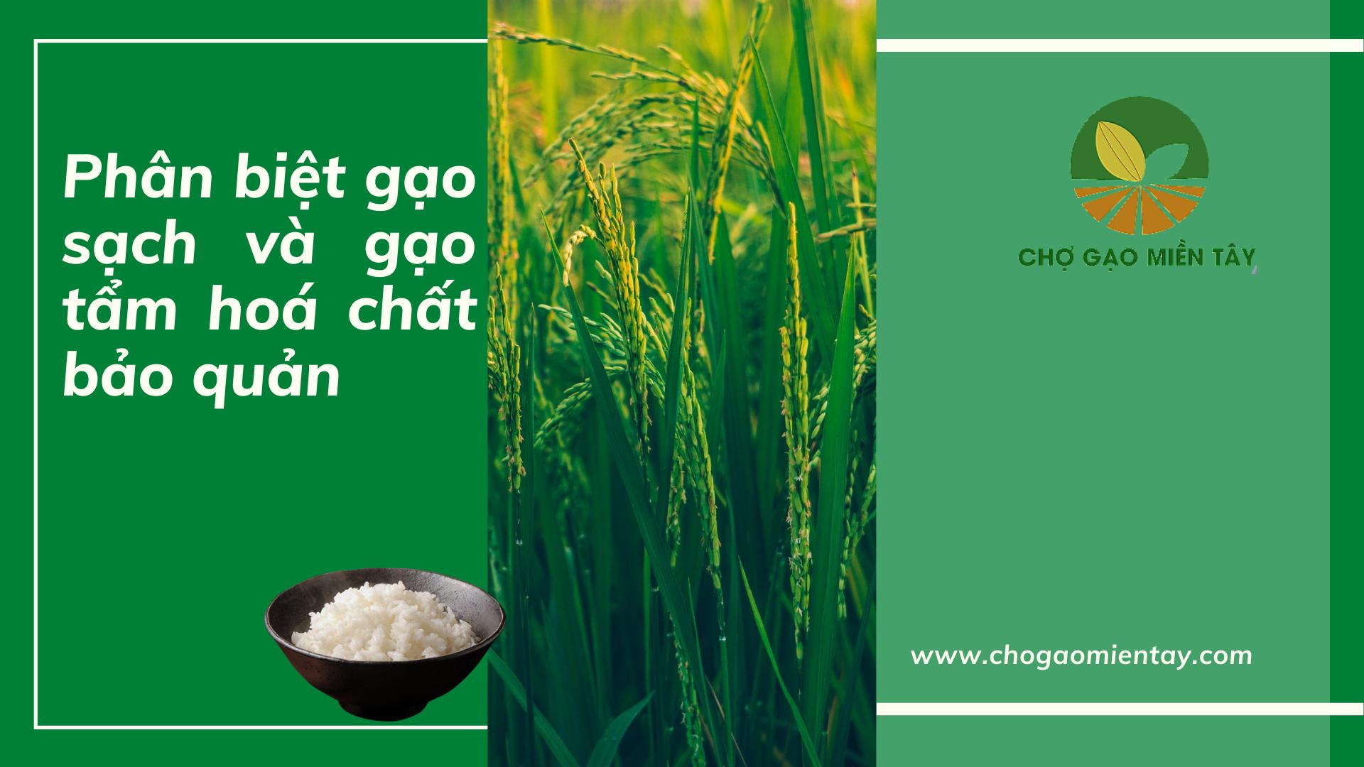 phân biệt gạo sạch và gạo chứa chất bảo quản