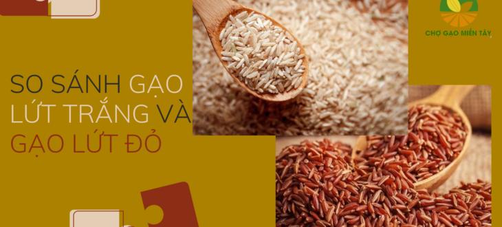 so sánh gạo lứta đỏ và gạo lứt trắng