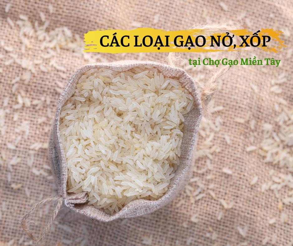 các loại gạo nở xốp