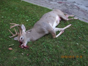 Deer killed on Washtenaw, Oct