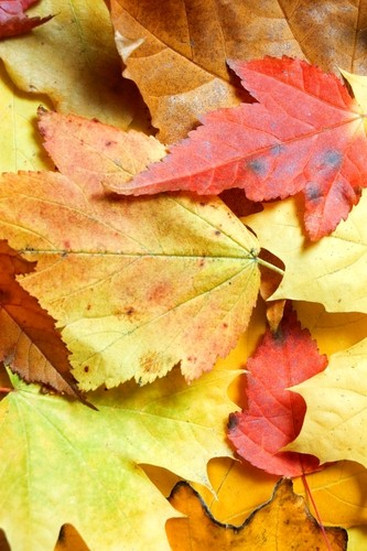 Increasing brand exposure through autumn-themed gifts