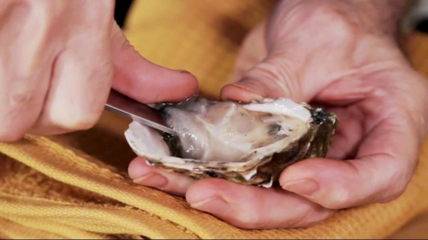 Shucking Oysters and Clams