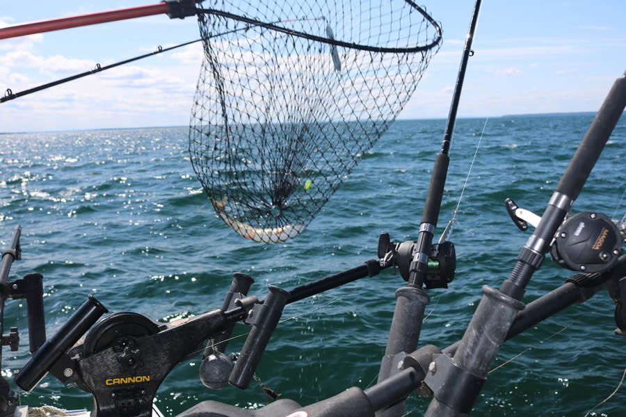 gull-wing-charter-service-reeling-in-the-fish