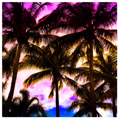 Pluralism, Paradise and Palm Trees
