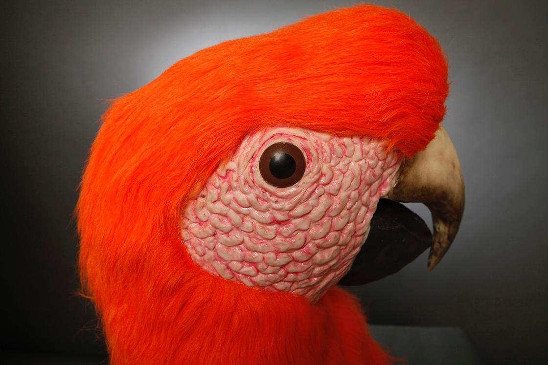 bird (1)