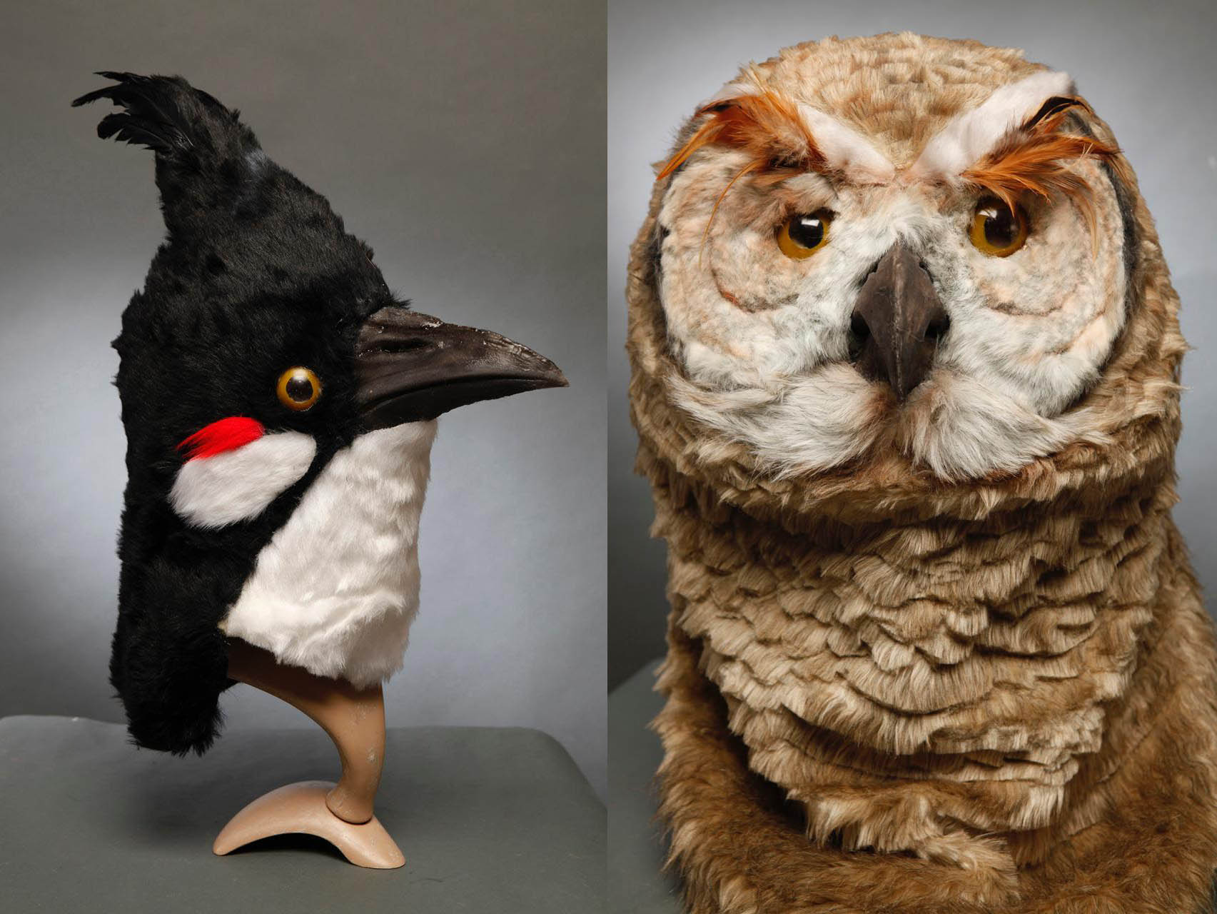 bird (2s)