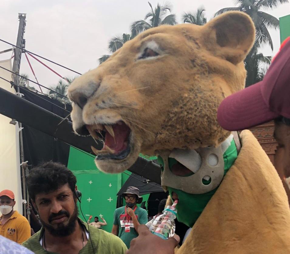 lion (2)s