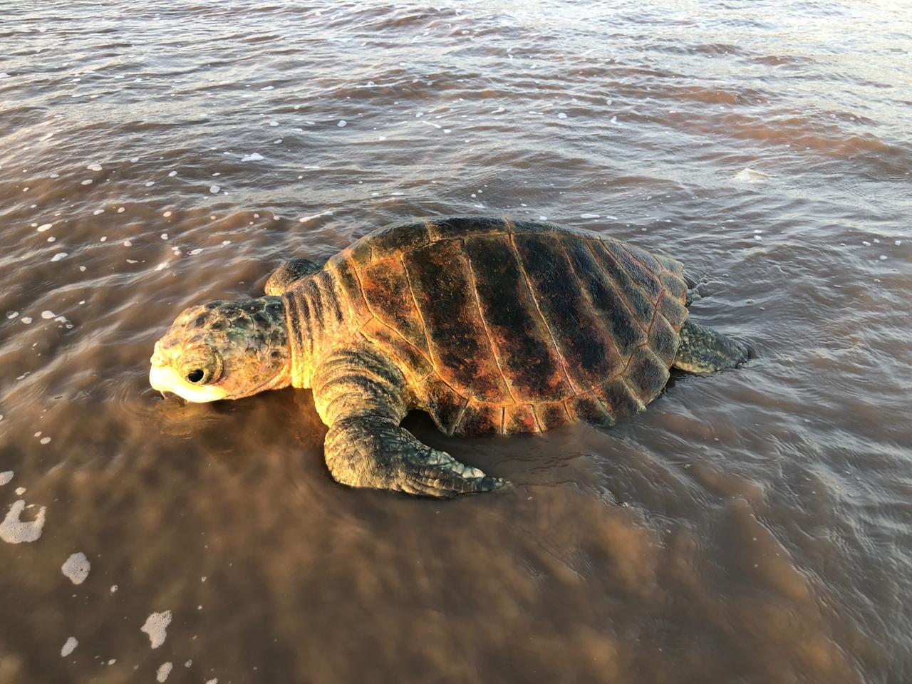 turtle (1)