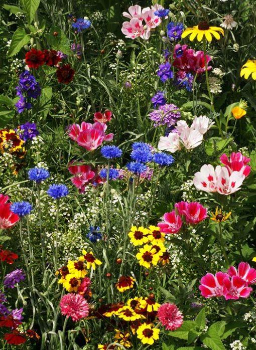 Bird & Butterfly Flower Mix