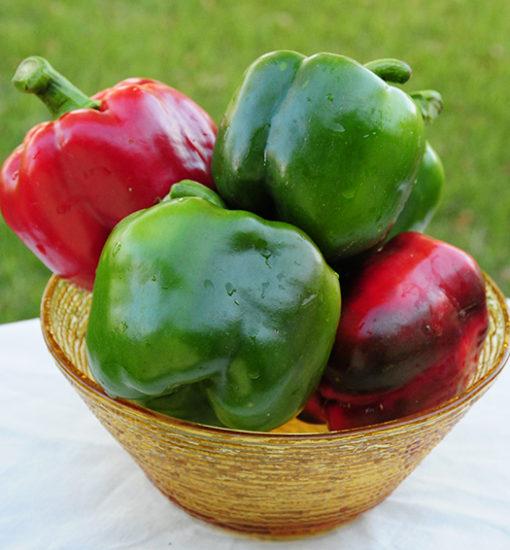 California Wonder Bell Pepper Seeds