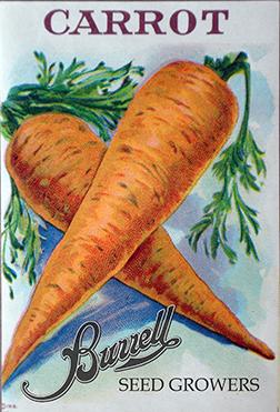 Heirloom Carrot Seeds