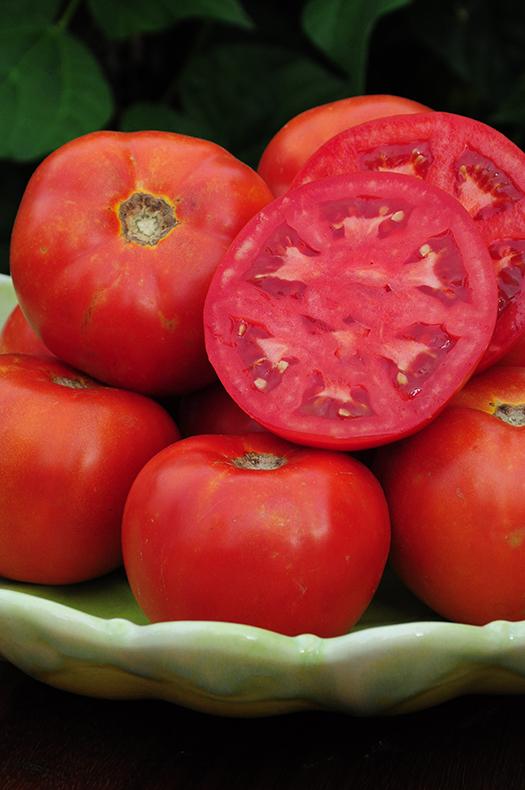 DVB 2121 Tomato
