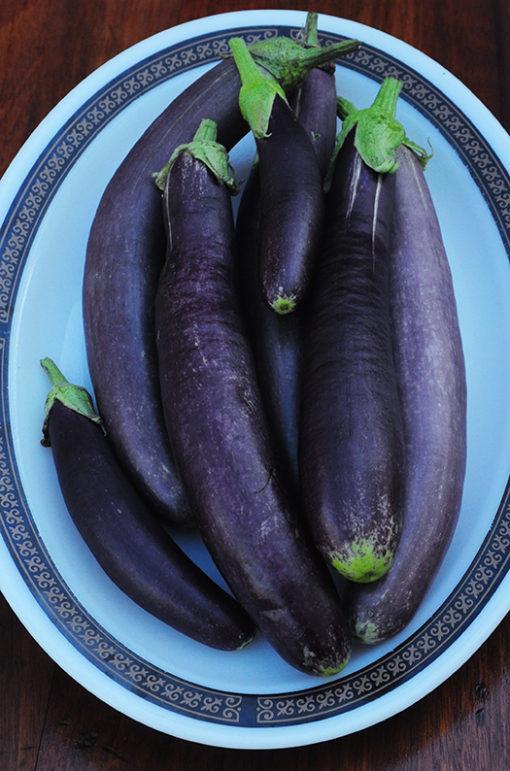 Italian Heirloom Eggplant, Indian Eggplant
