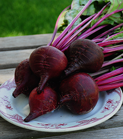 Ruby Queen Beet Seeds