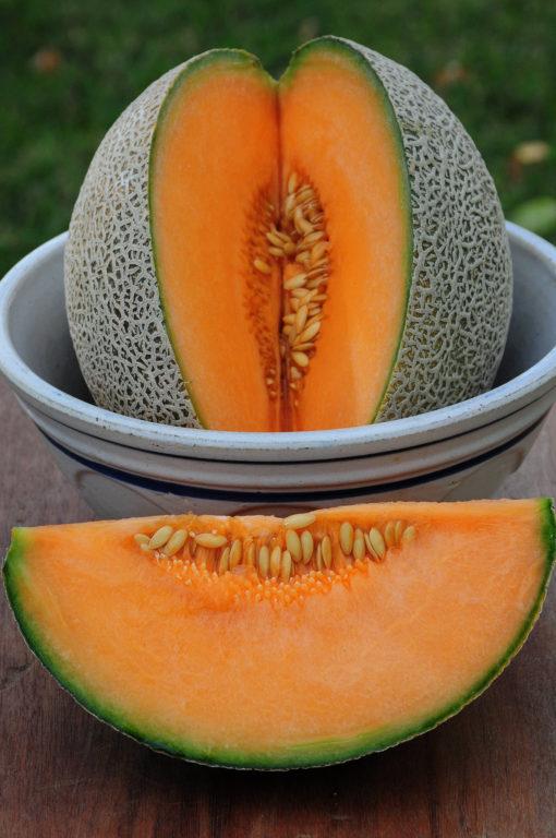 San Luis Cantaloupe Seeds
