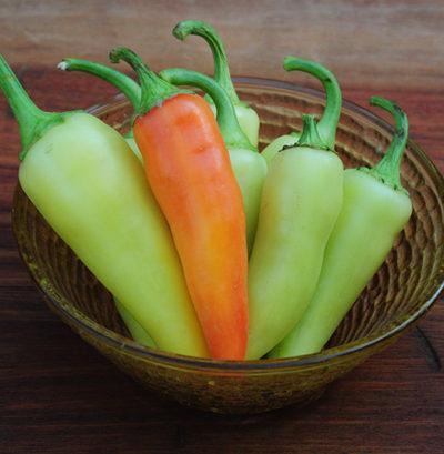 Yellow Hot Chili Pepper, Geuro Chili Pepper