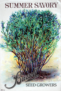 Summer Savory Seeds