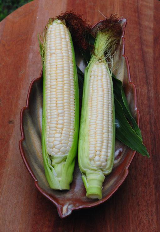Heirloom Silver Queen Corn Seeds
