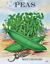 Heirloom Snap Pea Seeds