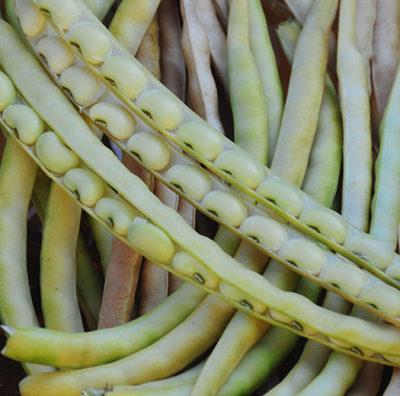 Southern Peas, Field Peas