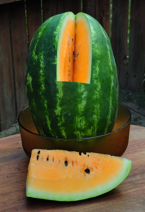 Yellow Shipper watermelon seeds