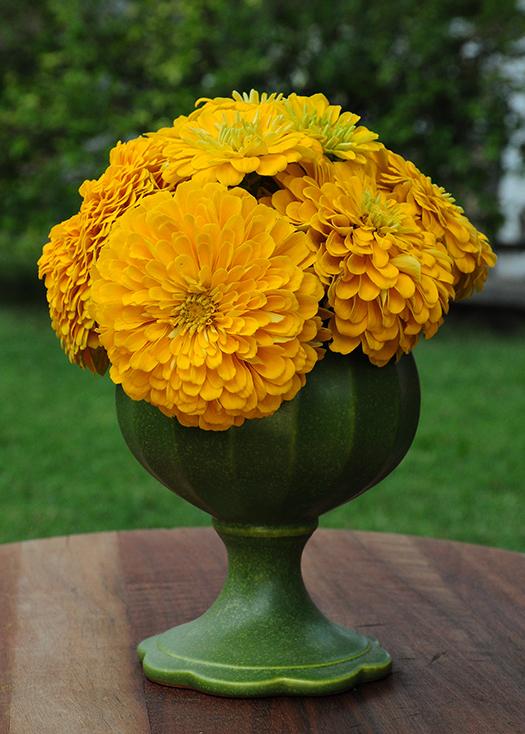 Yellow Zinnia vase