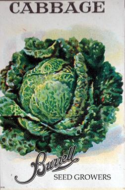 Savoy Cabbage Seeds