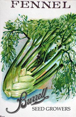Sweet Fennel Seed