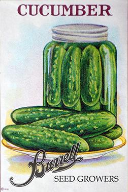 Pickling Cucumber Seed