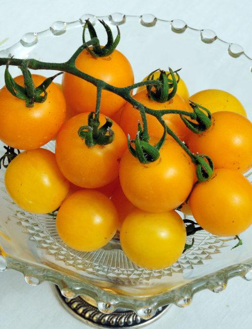 Patio Choice Tomato Seeds