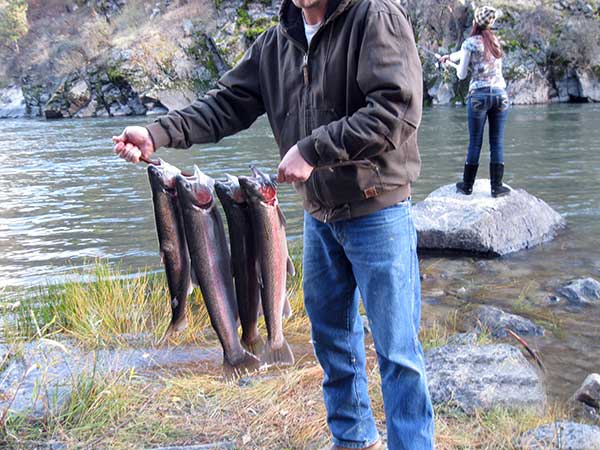 Waters Edge Idaho RV Park offers fun Cutthroat trout fishing right from your RV site or just minutes away is thrilling Salmon and Steelhead fishing on Salmon River