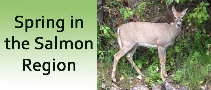 Spring Happenings in the Salmon Region
