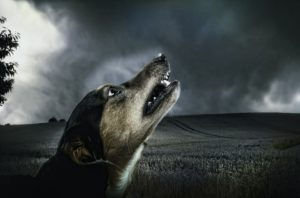 Imagen obtenida de: https://pixabay.com/es/perro-oscuro-aullido-moonlight-183288/