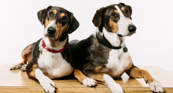 South Korean Company will Clone your Dog for $100,000